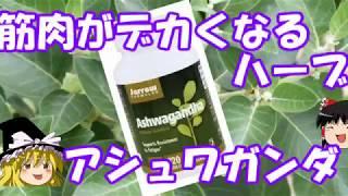 ゆっくりサプリレビュー 04 「アシュワガンダ」