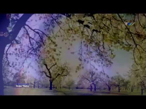 SAMER FANEK - Wishful Thinking