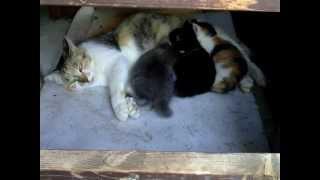 帰ってきたのら子猫3匹+母猫 10月19日