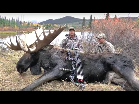 Archery Yukon Moose Hunt With Bob Fromme