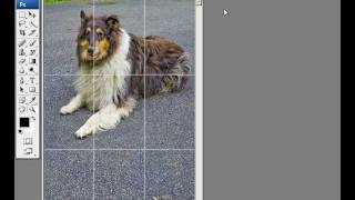 How to Make a Rule of Thirds Grid in Adobe Photoshop - Tutorial
