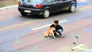 This Little Dog Was Hit By A Car, So This brave Little Boy Rushed Into Traffick To Save Him