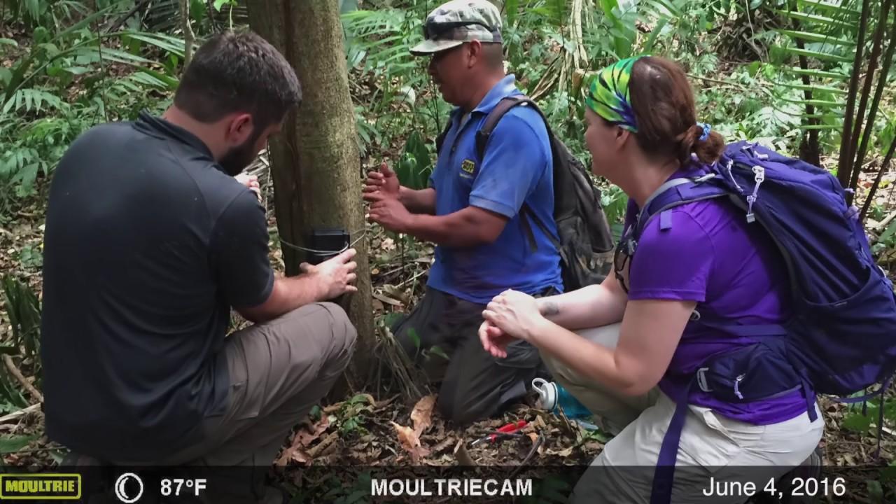 """Download """"El Canti"""" Belize Jaguar - Birmingham Zoo Wildlife Conservation Outreach"""