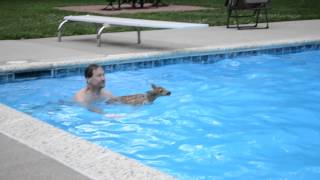 Baby Deer Stuck in Pool