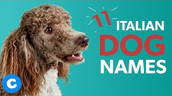 11 Italian Dog Names | Chewy
