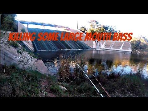 Killing Some Large Mouth Bass   Buffalo Springs Lake