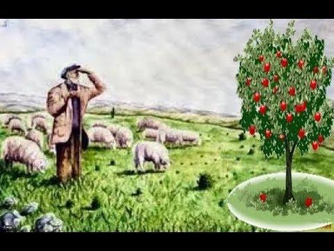 Ibret Verici Dini Hikaye Yaşlı çoban Ve Elma Ağacı Youtube