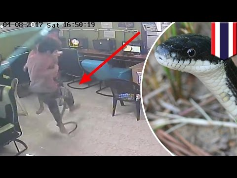Thumbnail: Snake attack: internet cafe patrons surprised by snake, all hell breaks loose - TomoNews