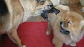 В приюте собак бирюлево вы сможете взять домой собаку. Огромный выбор питомцев.