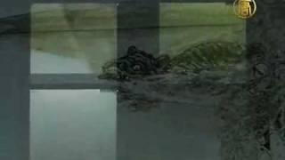 Giant Monster Caught on Film Tape in Sweden Lake