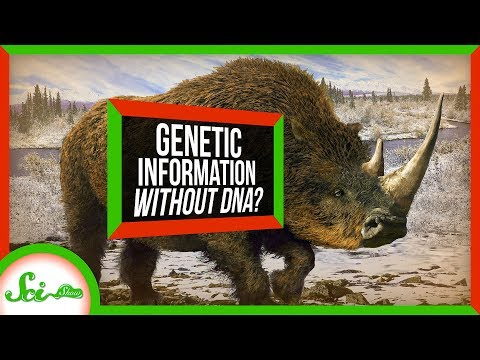 This Ancient Tooth Could Shake Up How We Study Evolution | SciShow News