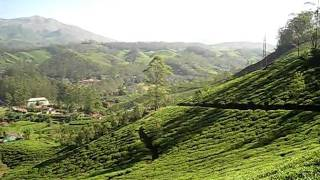 view of tea plantation filled hills around Munnar India