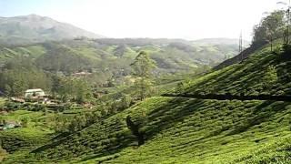 view of tea plantation filled hills around Munnar India
