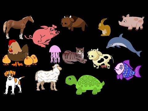 Animals Song for Kids   Farm Animals   Zoo Animals For Children Kindergarten by JeannetChannel