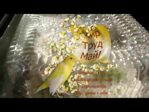 Проращивание семян колеусов  в перлите в домашних условиях. С 20 по 29 апреля