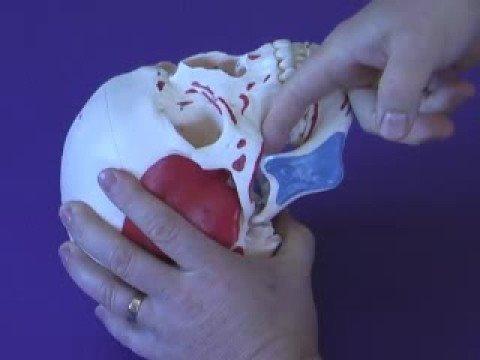 Temporomandibular Disorders Physiopedia