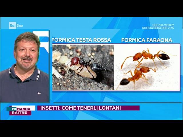 quante specie di formiche esistono