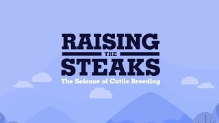 Video Raising the steaks – the science of cattle breeding. download MP3, 3GP, MP4, WEBM, AVI, FLV Agustus 2017