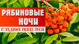 Смотреть клип Александр Закшевский - Рябиновые Ночи