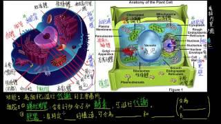 1-2觀念15真核細胞的基本構造 細胞質與胞器的簡介