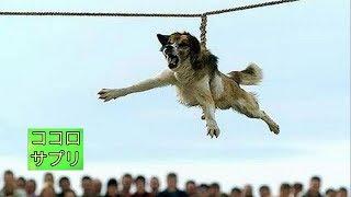 21世紀だというのに、時代錯誤も甚だしい「狂犬病予防の儀式」を行って...