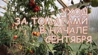Уход за ТОМАТАМИ в первой половине СЕНТЯБРЯ(В этом видео поговорим о том, как ухаживать за томатами в первой половине сентября, в самом начале осени...., 2014-09-18T03:08:40.000Z)