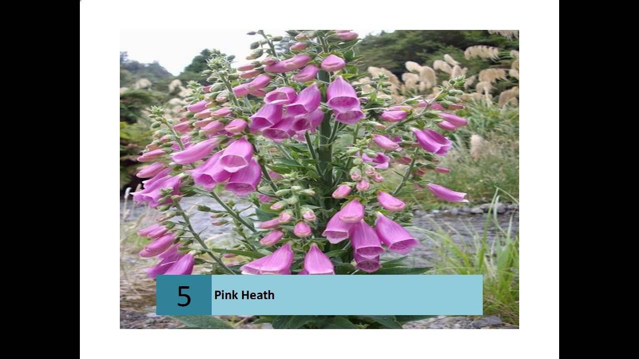 Pink Heath Youtube