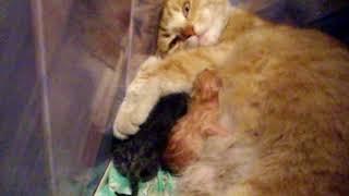 Шевелятся в животе котята  у кошки