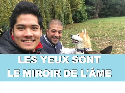 Dog tv video funnydog tv for Miroir de l ame