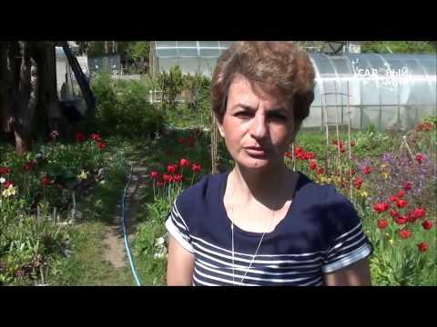 Как ухаживать за розой микс мини :: роза патио микс уход