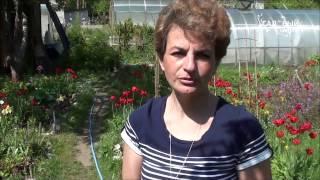 Как помочь розам после зимы(, 2015-05-27T12:30:00.000Z)