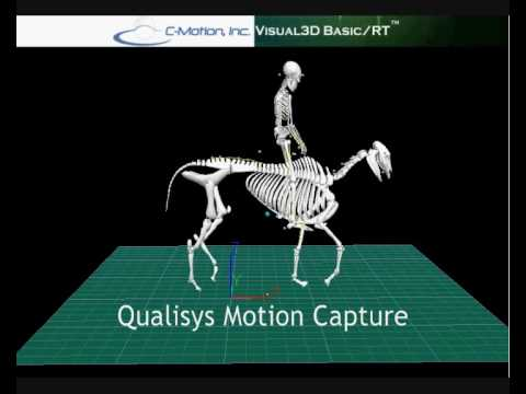 Qualisys Motion Capture of a Horse and rider  YouTube
