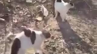 """Нападение """"стаи"""" котов на собаку и человека"""