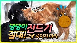 반려동물 진드기 박멸법-반려동물 예방접종의 모든 것(2편)