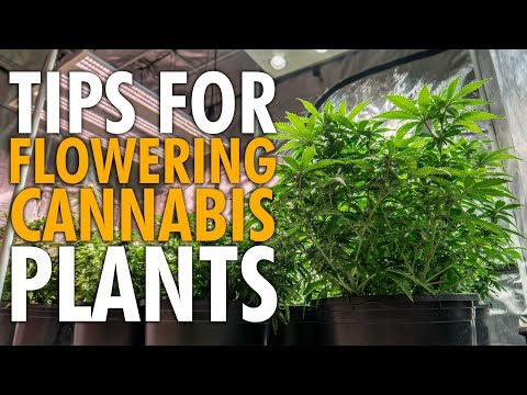 How To Prep Your Plants For Flower – Indoor Auto Grow