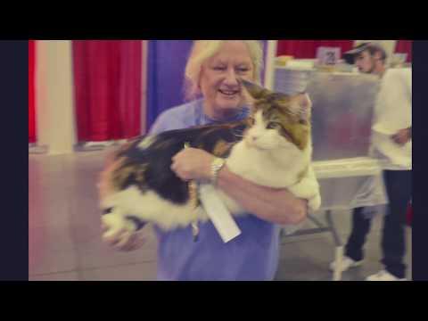 Cat Show Plant City Florida 2019