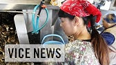 The Worst Internship Ever: Japan's Labor Pains