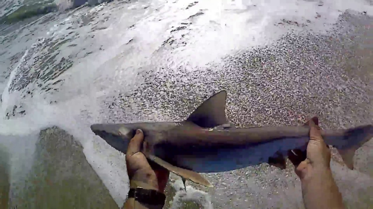 Sandbar Sharks Outer Banks Youtube