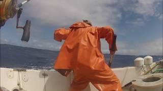 ahi tuna and mahi mahi dolphin fish fishing north shore oahu