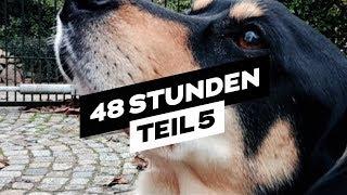 Mit dem Hund Draußen [48 🔴 LIVE] Teil 5