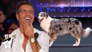 Magic Dog Act Gets Simon Cowell Smiling on AGT 2020 | Magician's Got Talent