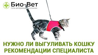 Нужно ли выгуливать кошку. Рекомендации специалиста