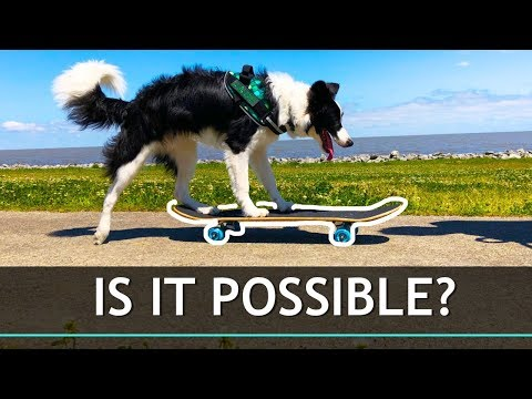 What Happens When You Try to Teach a Dog To Skateboard?