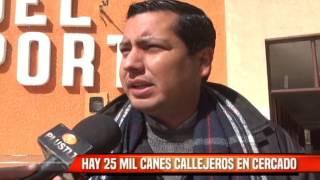HAY 25 MIL CANES CALLEJEROS EN CERCADO