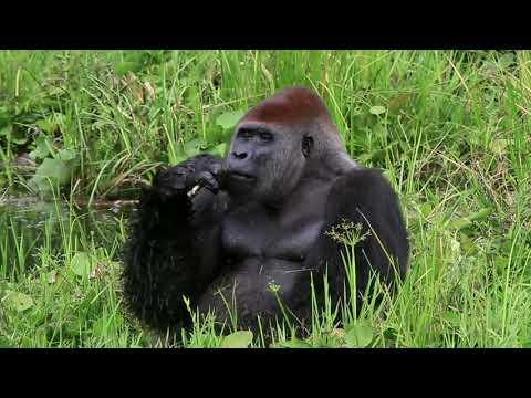 Initiative pour le patrimoine mondial forestier d'Afrique centrale (CAWHFI)