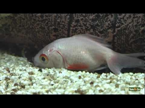 Malade - Mes poissons - Tom&Co