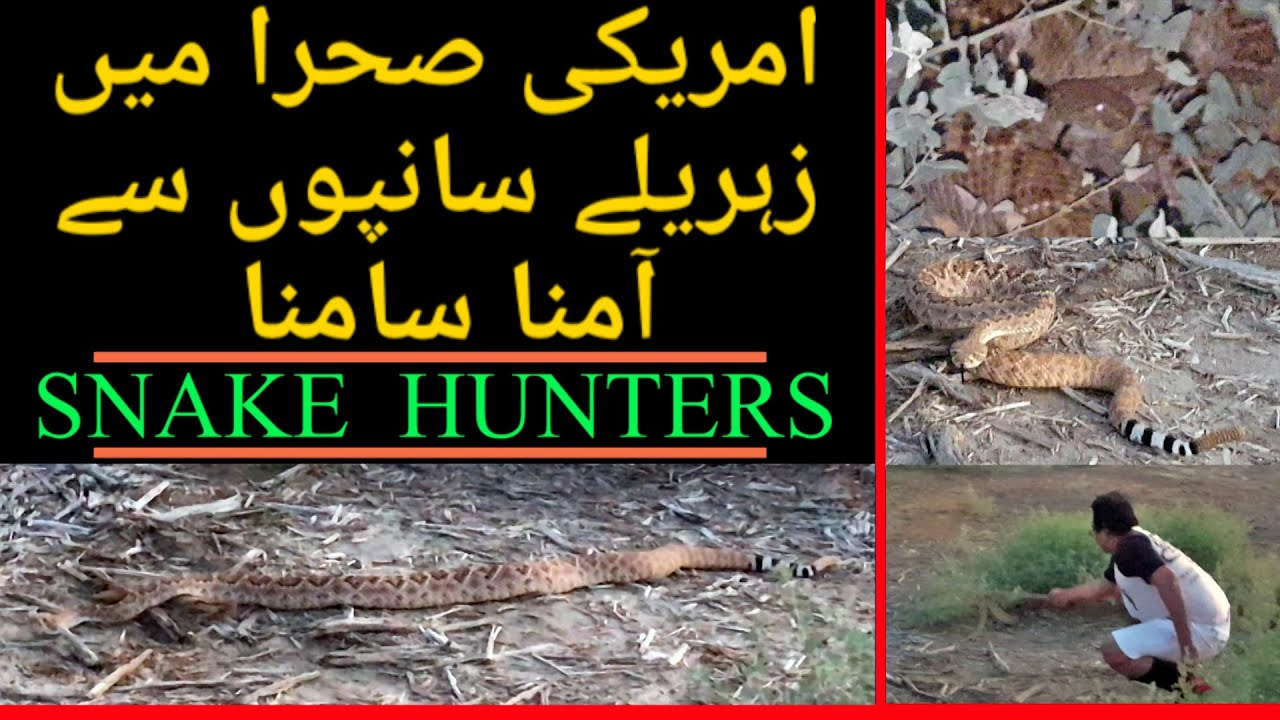 RAAZ Ep 79 (  Face To Face With The Venomous Snake ){Snake Hunters} 11 -07-2020