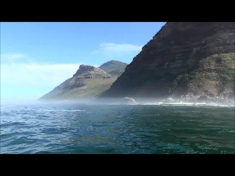 A cruise to Duiker Island, from Hout Bay. Seal Island. Cape Town, South Africa