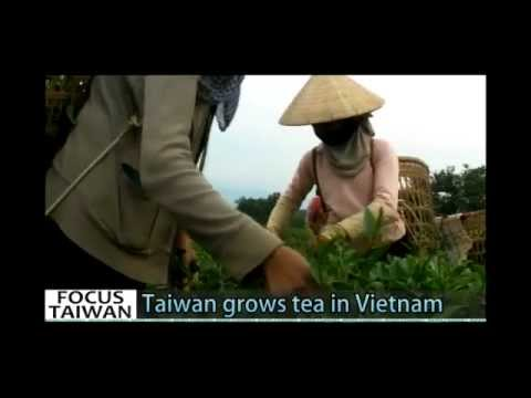 Taiwan's farmers grow tea in Vietnam