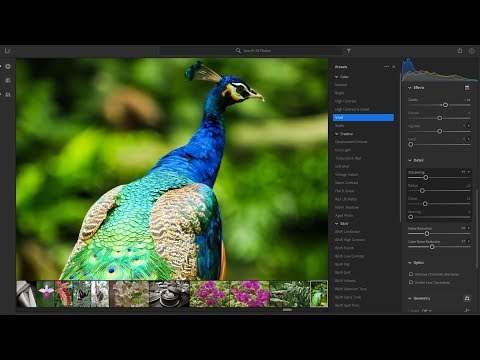 Обработка фото в Lightroom по стандартам микростоков | Adobe Stock
